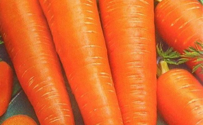 Ранние сорта моркови Голландской селекции