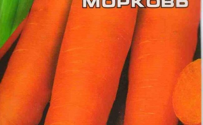 Морковь Королева осени — один из лучших позднеспелых сортов