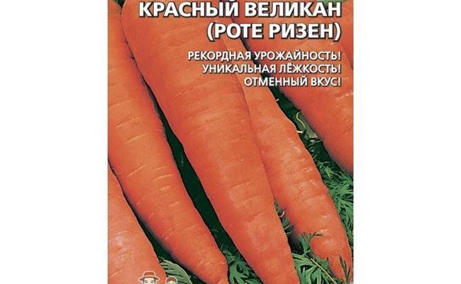 Описание, характеристика и особенности выращивания сорта моркови Красный Великан (Роте Ризен)