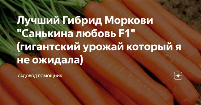 """Лучший Гибрид Моркови """"Санькина любовь F1"""" (гигантский урожай который я не ожидала)"""