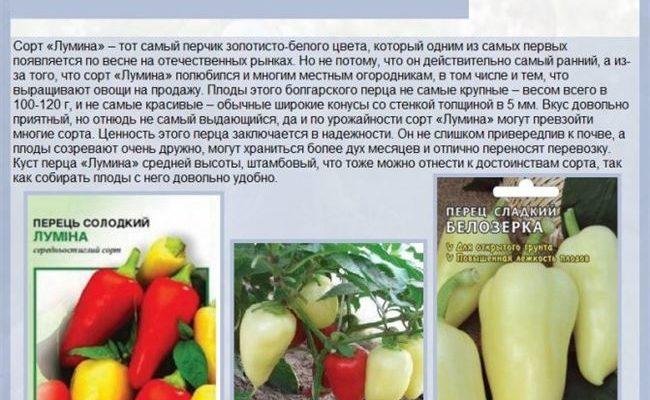 Перец Белозерка: фото, описание сорта, отзывы тех, кто сажал