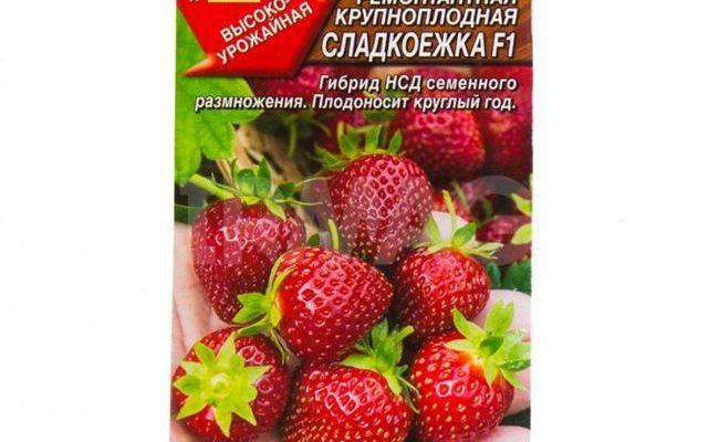 Клубника СЛАДКОЕЖКА (Россия)