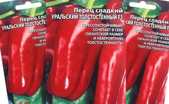 Перец сладкий Уральский толстостенный F1. Внешний вид, плюсы, минусы, рекомендации по выращиванию
