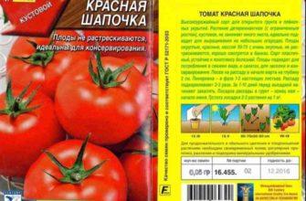 Популярные среди дачников помидоры «Красная шапочка»: описание сорта и инструкция по его самостоятельному выращиванию