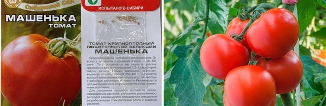 Томат Машенька: отзывы, фото, урожайность