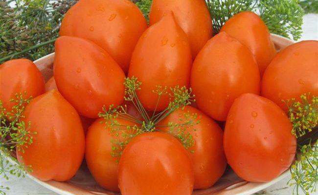 Плоды с великолепным вкусом — томат Огонь F1: описание сорта и советы по его выращиванию