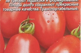 Описание сорта томата «Ракета»: характеристики, фото плодов, урожайность, важные достоинства и недостатки