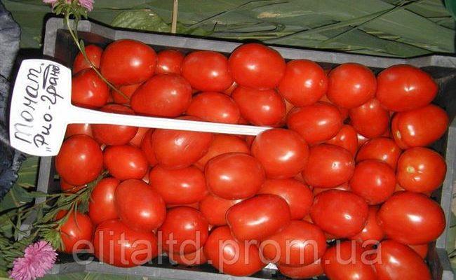 Томат Рио гранде: отзывы, фото, урожайность