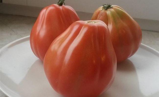 Томат Сердце буйвола — салатный сорт помидоров для любого региона России