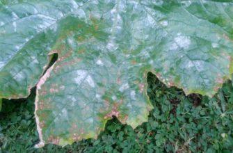 Какие болезни и вредители опасны для кабачков?