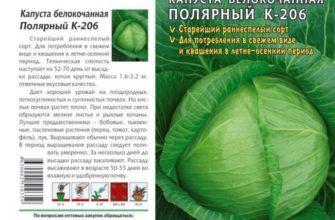 Капуста Галакси F1: отзывы о выращивании, описание белокочанного сорта и характеристики, фото семян