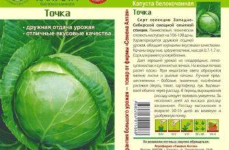 Ранняя капуста Июньская: от посева семян до сбора урожая
