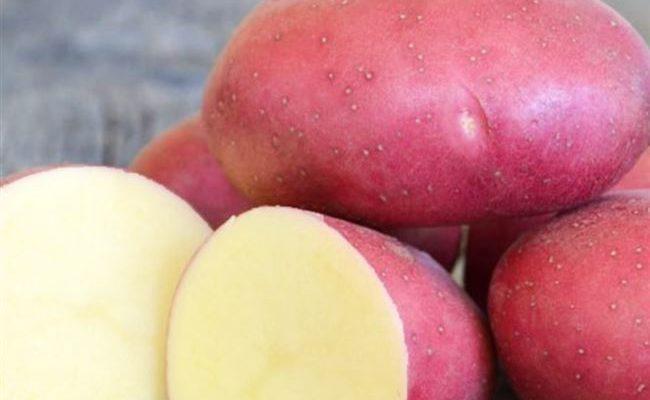 Картофель Рокко – характеристика и описание сорта, отзывы, вкусовые качества