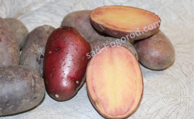 Картофель семенной Сюрприз (1 кг)