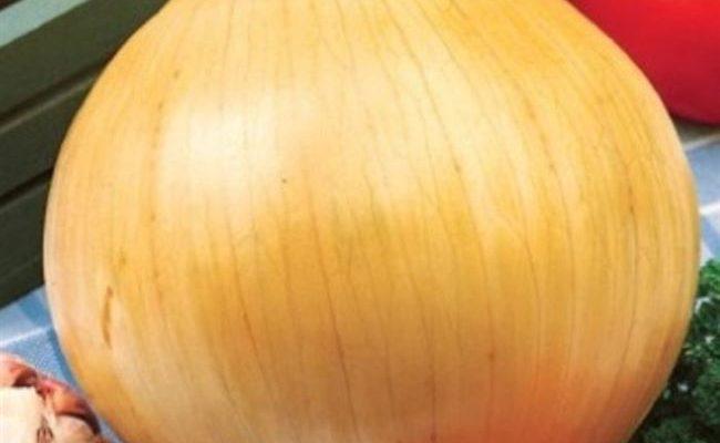 """Отзыв: Семена лука репчатого СеДеК """"Фермер ранний"""" - Хороший сорт репчатого лука на репку из семян"""