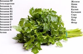 Фиделио семена петрушки (Enza Zaden / Энза Заден)