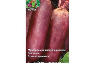 Багряный Цилиндр - сорт растения Свекла столовая