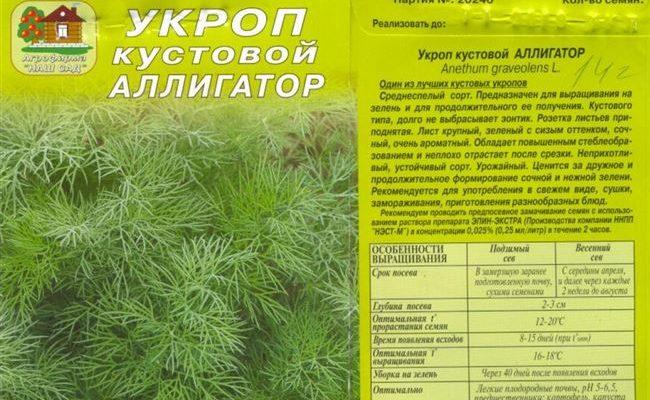 Укроп Аллигатор: отзывы, фото, урожайность