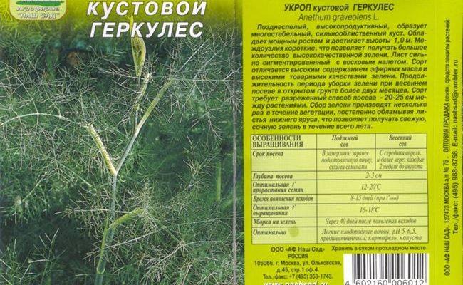 Укроп Геркулес: отзывы, фото, урожайность