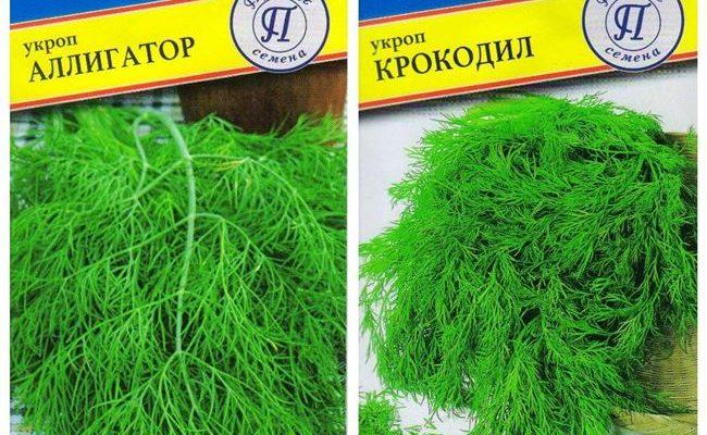 Укроп Коралл