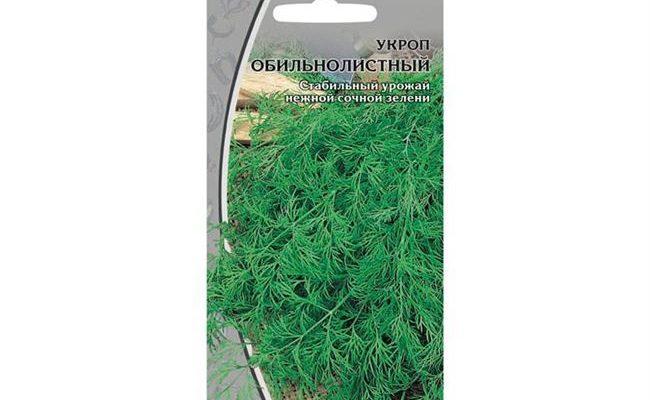Описание сорта укропа обильнолистный, его характеристика и урожайность