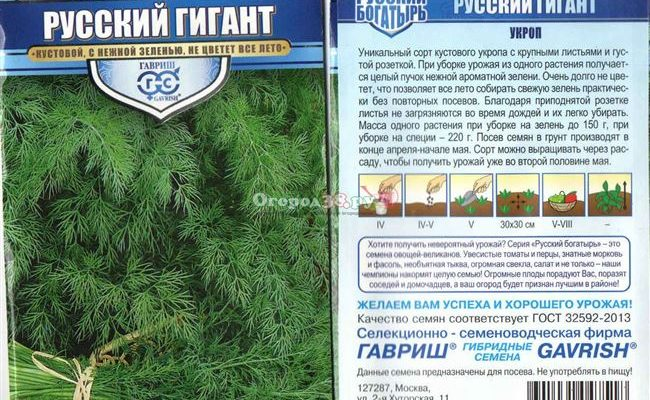 Укроп Русский гигант: отзывы, фото
