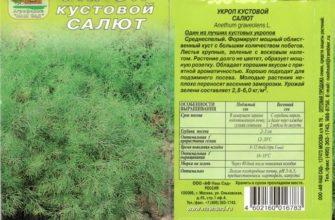 Описание и характеристика сорта укропа Салют, особенности ухода и урожайность