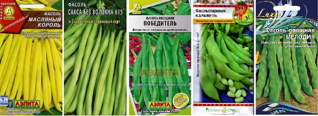 Креолка - сорт растения Фасоль овощная