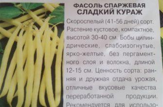 Самые вкусные и урожайные сорта спаржевой фасоли в 2020 сезоне