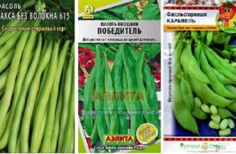 София - сорт растения Фасоль овощная
