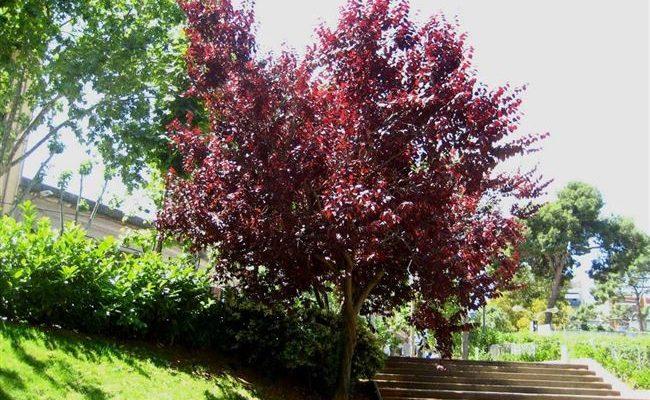 Потрясающее ДЕКОРАТИВНОЕ дерево