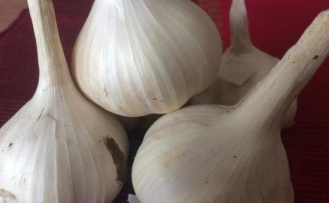 Описание сорта чеснока Петровский и особенности выращивания