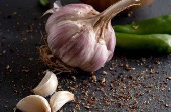 Сорта озимого чеснока, какие лучше сажать