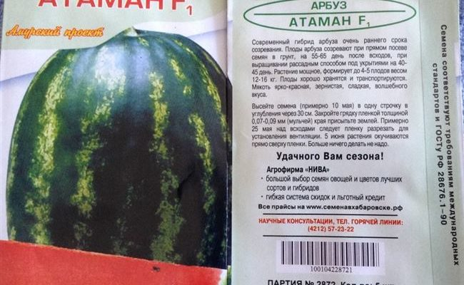 Описание и характеристика сорта арбуза Атаман
