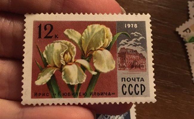 К Юбилею Ильича - сорт растения Ирис