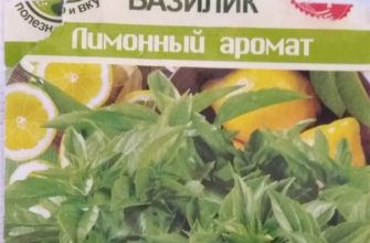 Лимонный базилик: описание, выращивание, применение