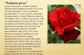Руисг 1636 А - сорт растения Роза