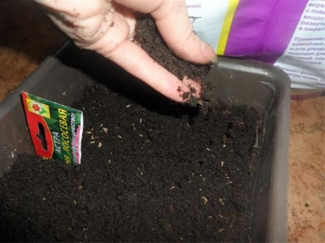 Посадка семян на рассаду и уход за ней