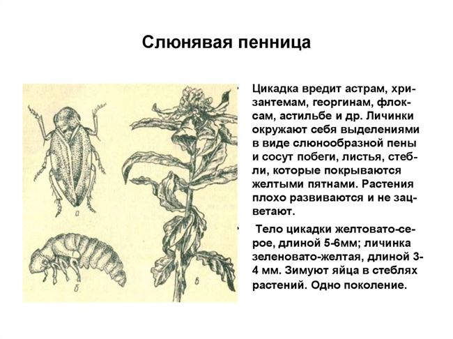 Условия для заражения и размножения