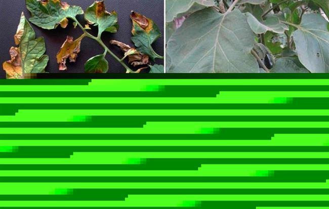 Причины заражения растений