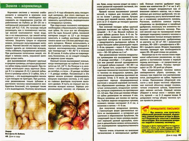 Размножение чеснока воздушными луковицами