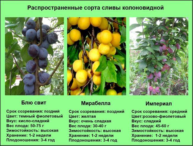 Про сад - плодовые деревья, кустарники, уход, советы, агротехника
