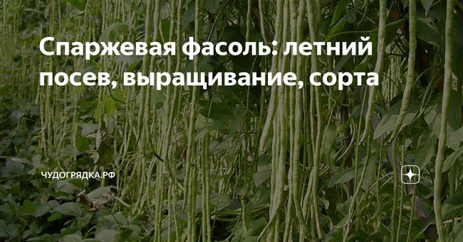 Посев фасоли