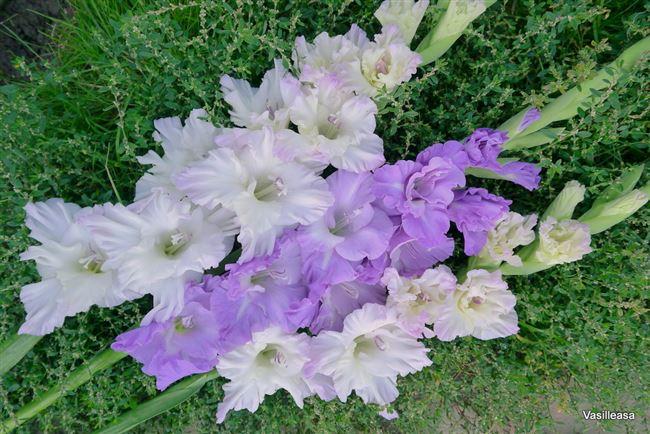 Срезка цветов