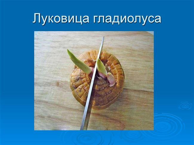 Делением луковиц