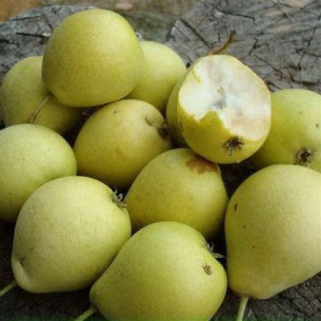 Характеристика плода