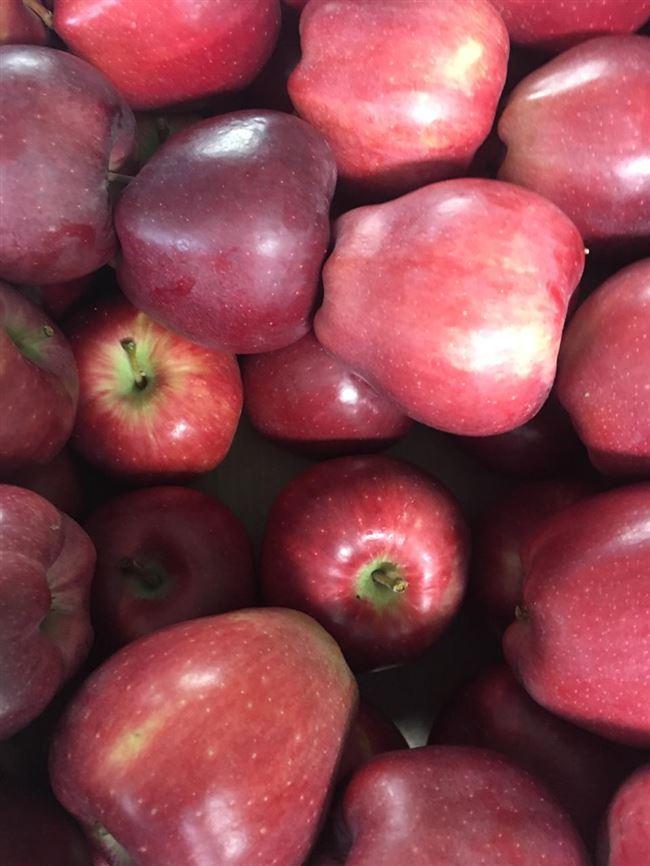 Яблоки: как это выглядит