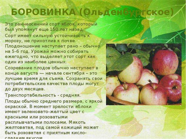 Особенности созревания и плодоношения