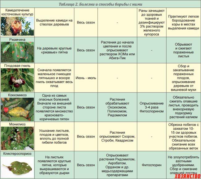 Профилактические обработки от вредителей и болезней