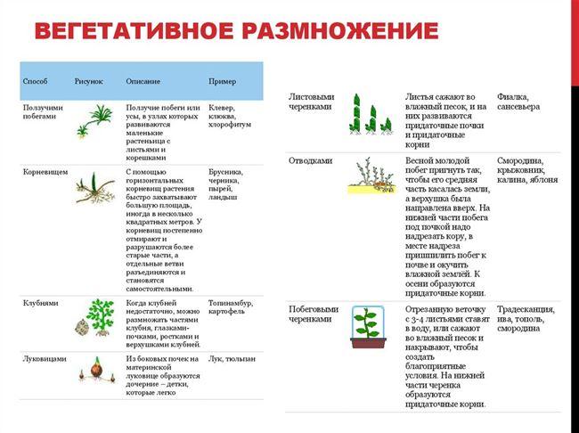 Вегетативное